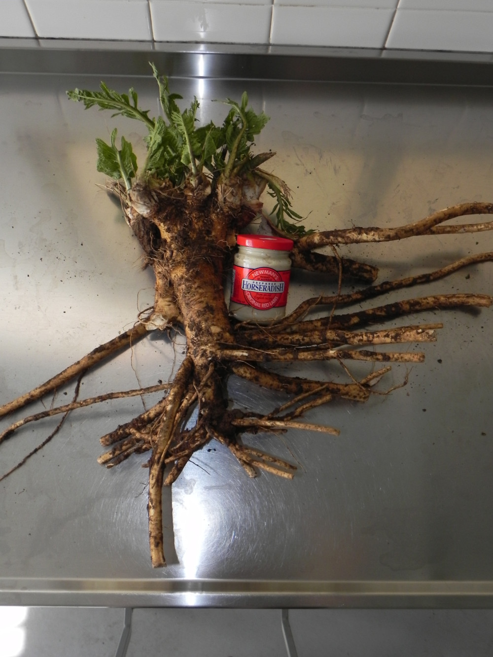 Newmans Horseradish production